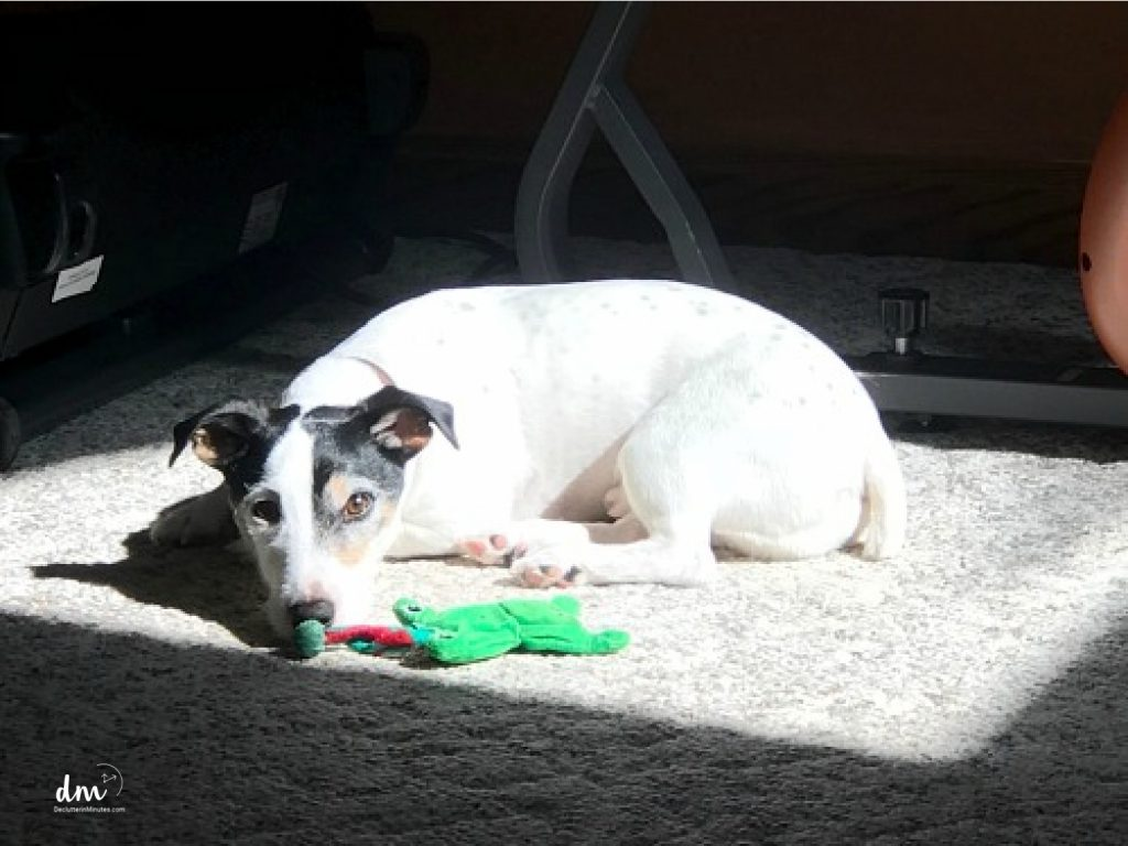 a white dog sitting in the sun with a green toy